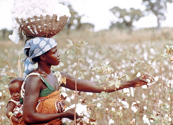 image copyright Africa Focus - University of Wisconsin-Madison - African woman picking cotton